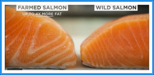 Differences Between Farmed and Wild-Caught Salmon
